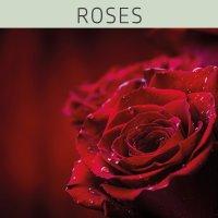 Farblack - ROSES